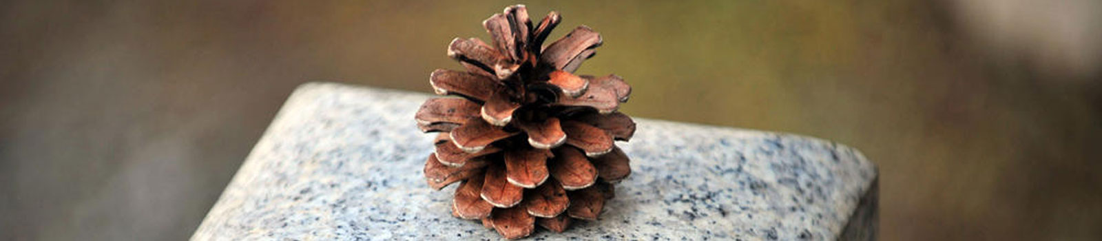 Image of a pine cone on marble
